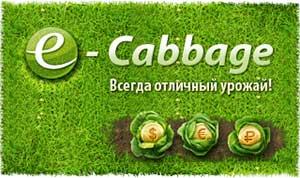 e-Cabbage